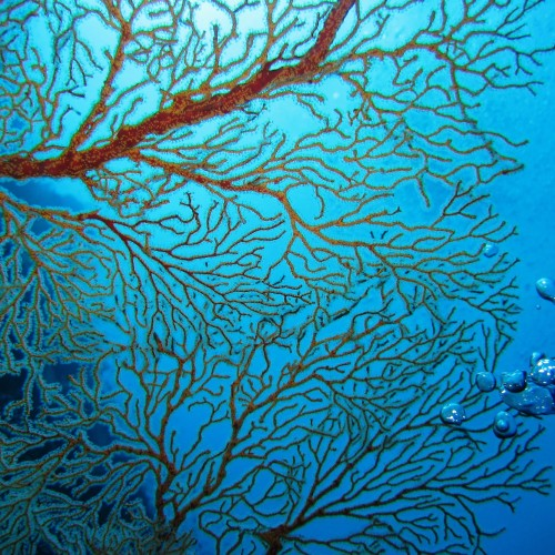 Enjoy planet's biodiversity: promote the conservation and restoration of underwater island ecosystems.