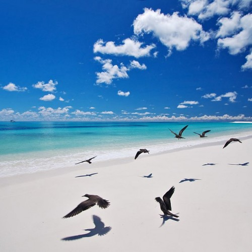 bird_island_west_beach_1024px