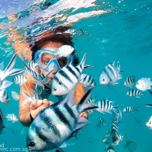 fish_lovers_snorkelling