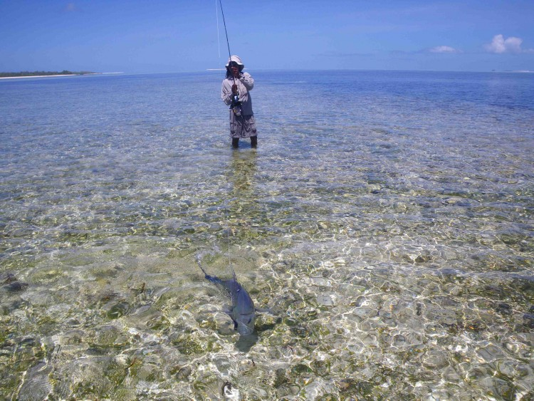 Private Spots:  Jigging, popping, bottom fishing and trawling on Owen bank, African banks North Amirantes. Fly fishing on African flats, Lady Denison, Remire reef , St Joseph, Poivre Island.